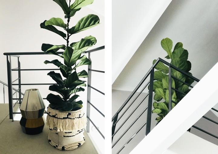 Loft 313 House PlantGuide